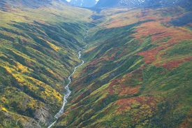 Fall colors in Wrangell - St. Elias National Park, Alaska.