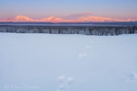 Photo of Mount Drum, Mount Sanford, Mount Wrangell and Mount Zanetti, of the Wrangell Mountains. Snowshoe hare tracks lead toward the mountains. In winter the the mountains catch wonderful soft alpenglow, and the resulting colors are quite a sight. The snow covered trees of the frozen boreal forest add to the mood. Mount Wrangell, Mount Zanetti, over the Copper River Basin, Wrangell - St. Elias National Park and Preserve, Alaska.