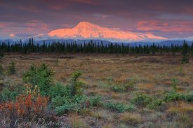 Sunrise over Mt. Sanford, fall foliage in the tundra and boreal forest in the foreground, Wrangell - St. Elias National Park and Preserve, Alaska.